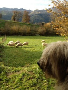 Yuki warns the sheep not to come any closer