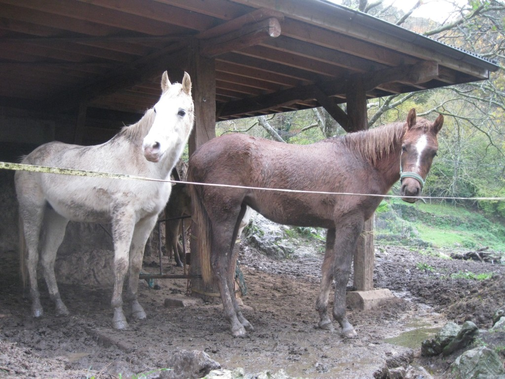 Two horses on a slab